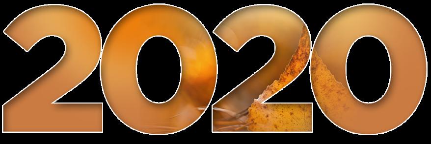 rumba_orange